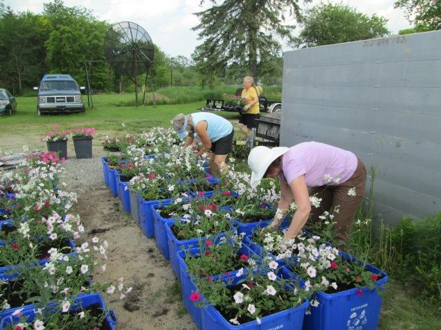 planting (3)