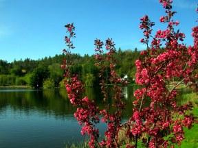 scenery spring (4)