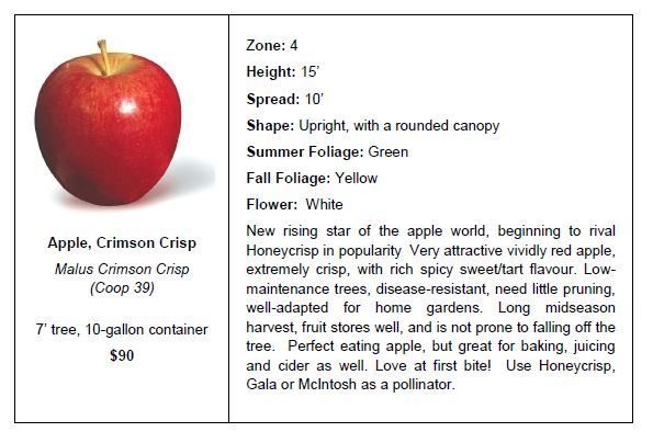 Apple Crimson Crisp