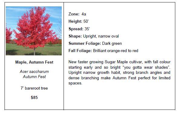 Maple Autumn Fest