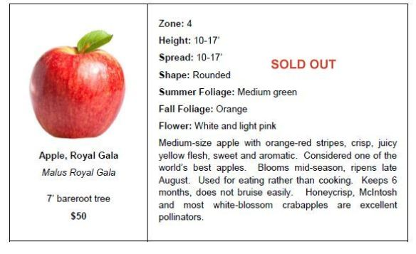 apple royal gala so