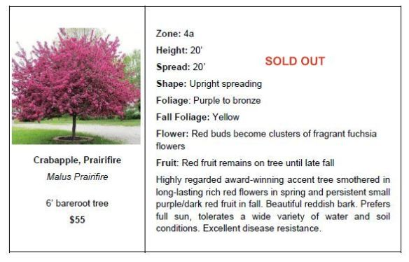 crabapple prairifire so