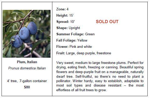 plum italian so