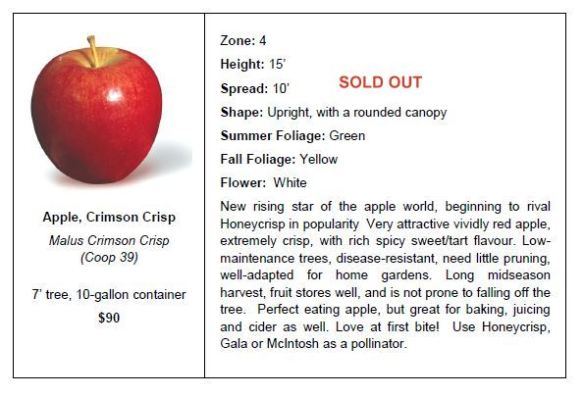 Apple Crimson Crisp SO