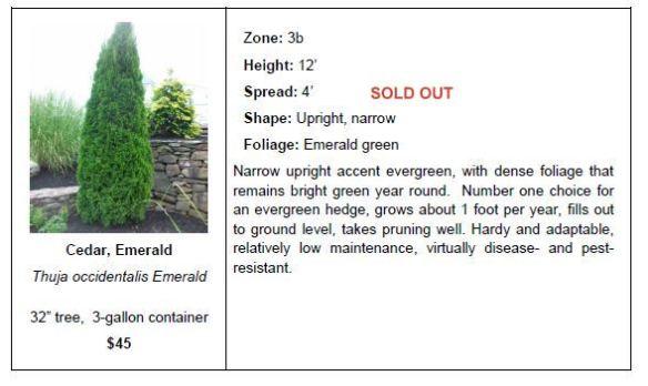 Cedar Emerald SO