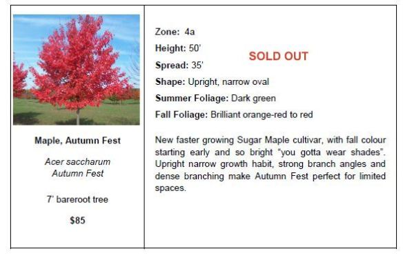 Maple Autumn Fest SO