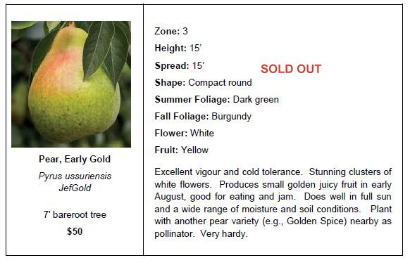 Pear Early Gold SO