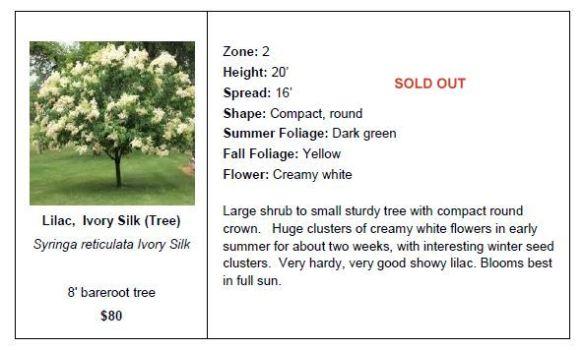 Lilac Ivory Silk SO