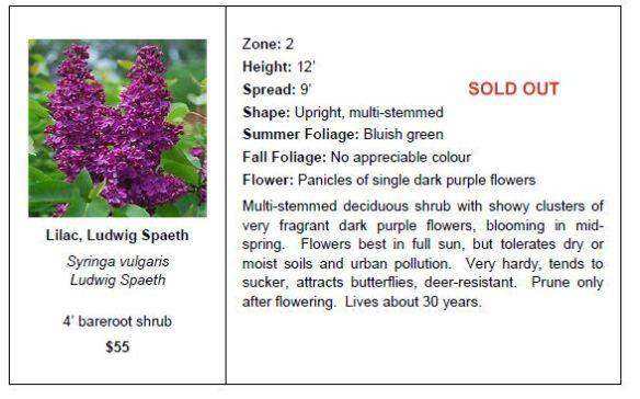 Lilac Ludwig Spaeth SO