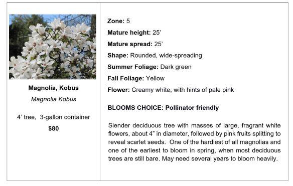 Magnolia, Kobus