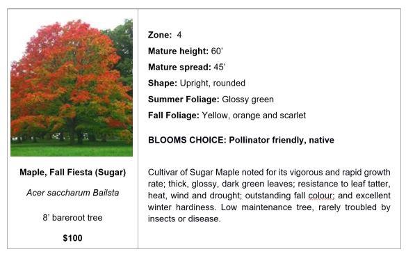 Maple, Fall Fiesta