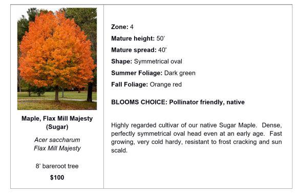 Maple, Flax Mill Majesty