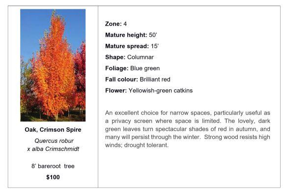 Oak, Crimson Spire